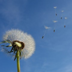 The Wind Blows Where it Wants To