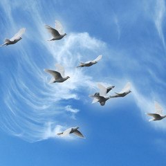 Save the Doves